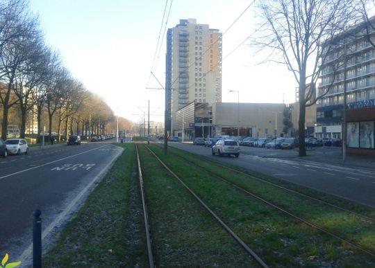 Zielone torowiska są w Amsterdamie normą