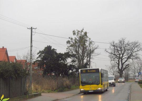 Żółte Citaro rozpoczyna kurs do Kościna